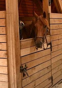 Explora Horse Stables