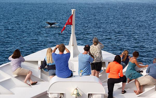 Whales in Baja California
