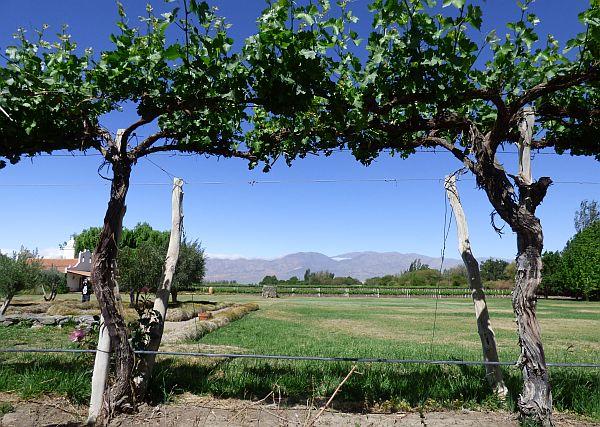 El Porvenir winery Argentina