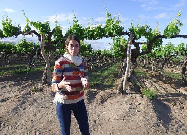 Esteco Winery Argentina