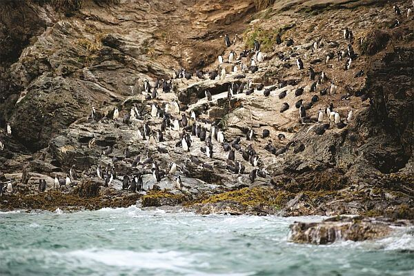 Cliffs Preserve penguins