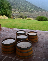Altair wine barrels