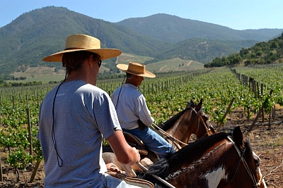 Vineyard tour by horseback