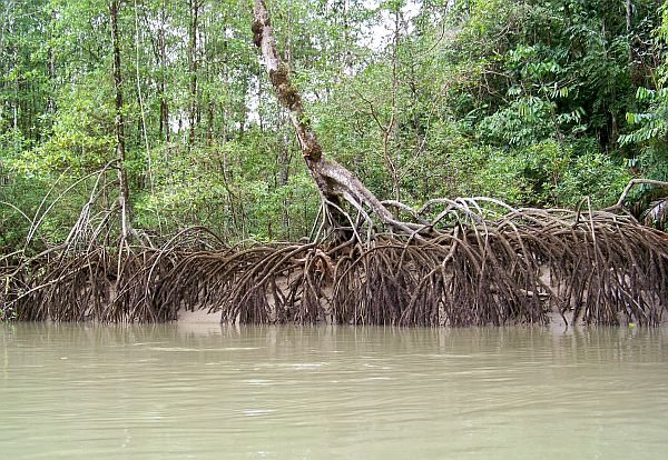 Colombia Mangroves