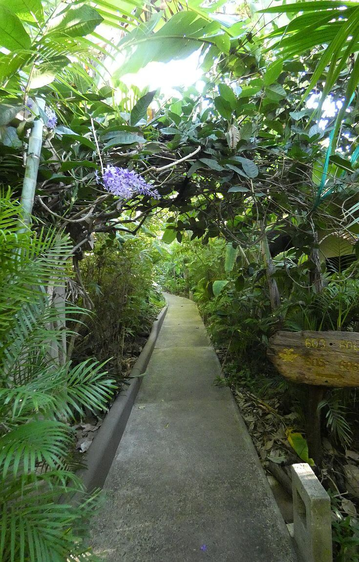 Lush tropical plants lining the path between rooms and villas at Cala Luna Tamarindo