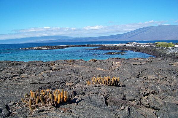 Galapagos planning
