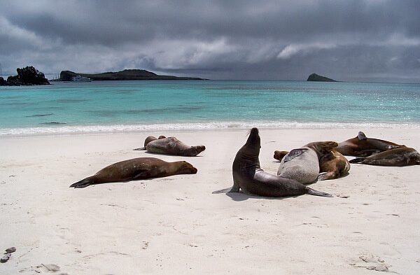 luxury galapagos tour