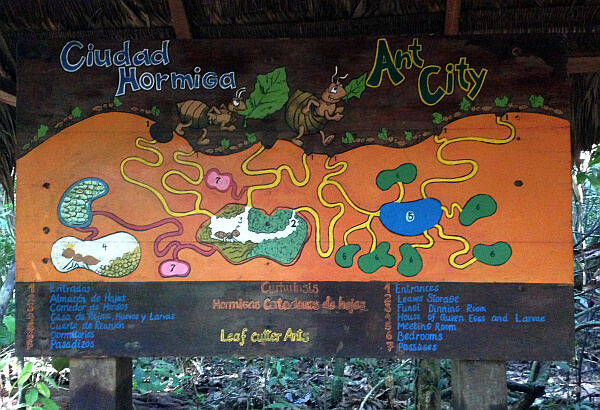 Tambopata Rainforest Ant city