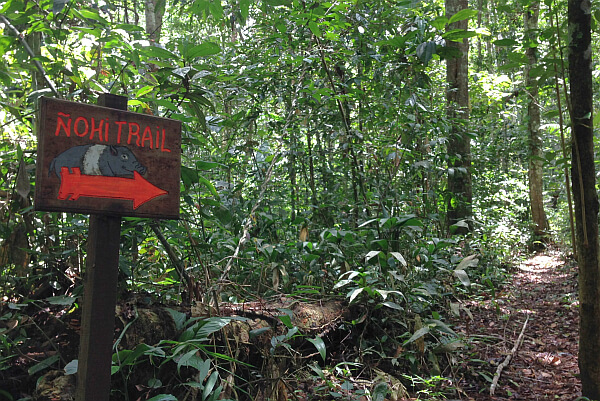 Nohi trails in the Tambopata Rainforest