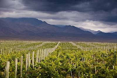 Vineyards Morada Mountains